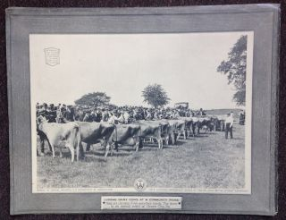 "Portfolio of 10 Photographic Plates); ""Better Sires - Better Stock"" Livestock Improvement Series..."